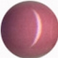 9730 Pink-Flesh