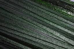 Effetre Aventurijn Green ribbon 30 gram